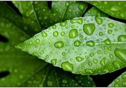 La foi qui fait tomber la pluie