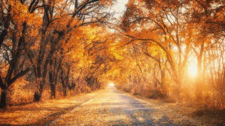 L'automne est nécessaire