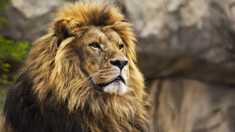 Vous le préférez comment Jésus ?Comme un agneau ou comme un lion ?
