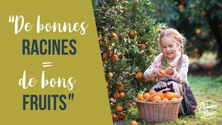 De bonnes racines = de bons fruits !