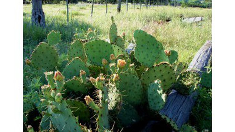 « Mais qui m'a fait pousser ces cactus ?! »