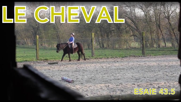 La Zap - le cheval