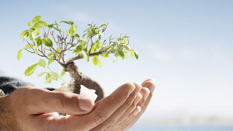 Ne néglige pas le potentiel de la semence