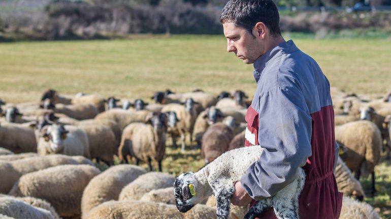 Comment prenez-vous soin du troupeau ?