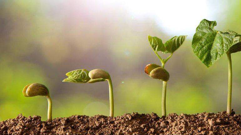 Il faut semer avant de récolter ...