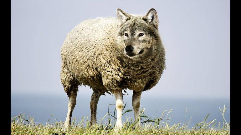 Des loups dans la bergerie du christianisme...