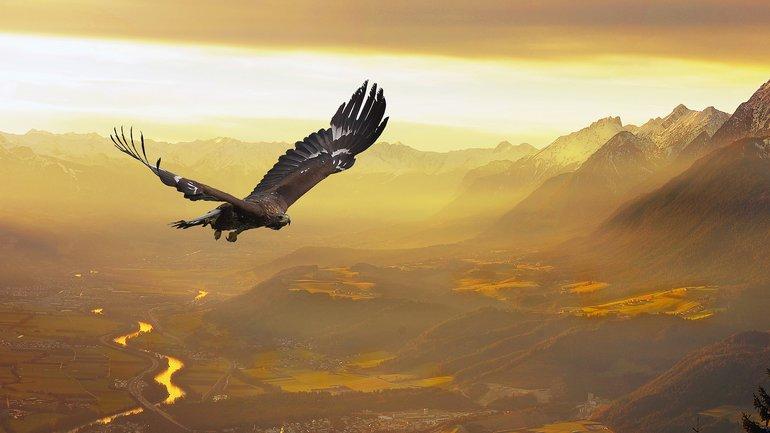 L'aigle et les poulets