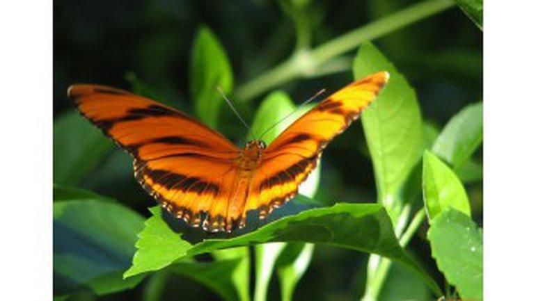 Un papillon au chaud !