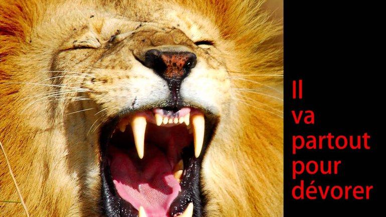 Une histoire de lion