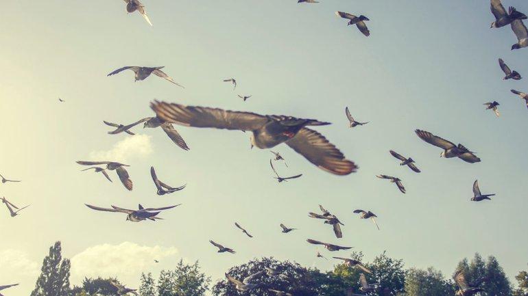 Regardez les oiseaux du ciel !