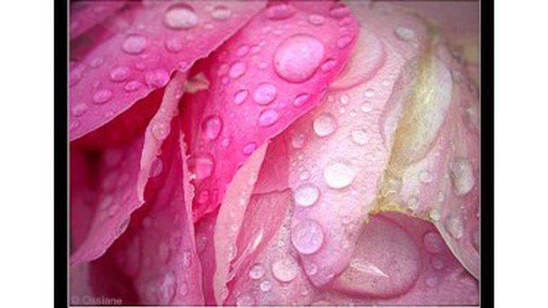 Sous la rosée des cieux