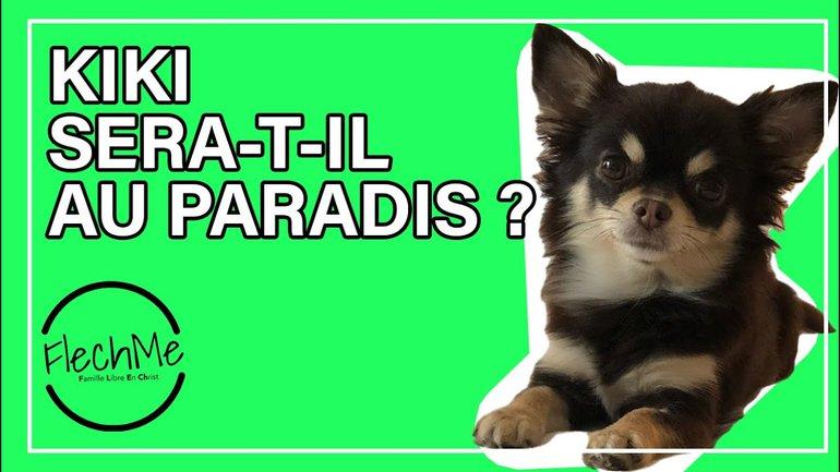 les animaux de compagnie iront-ils au paradis ? #askFlechMe