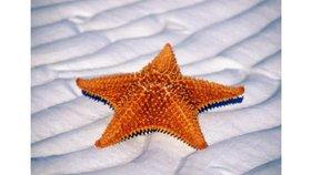 Une nouvelle étoile