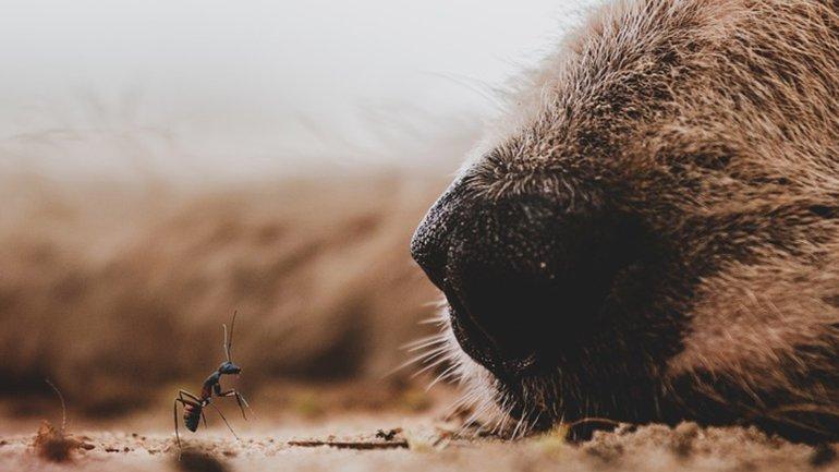 La vaillante fourmi