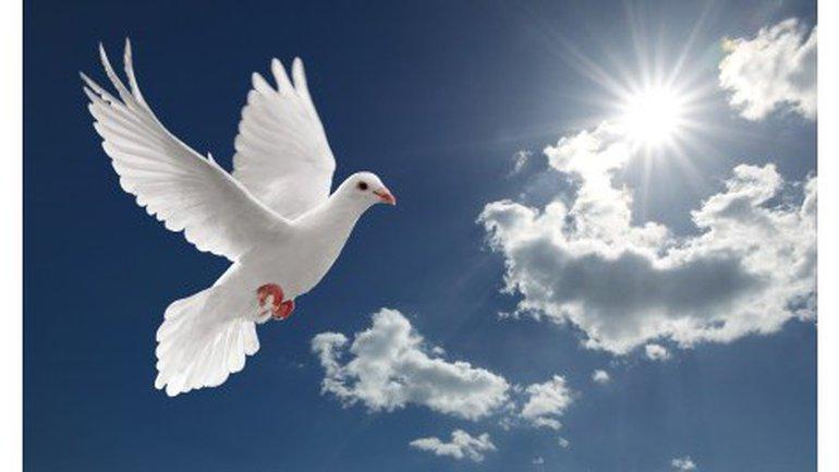 L'aigle ou la colombe ?
