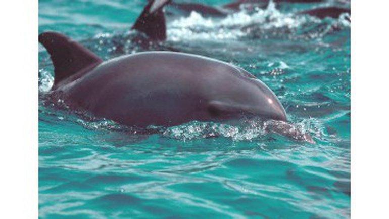 Le sourire du dauphin
