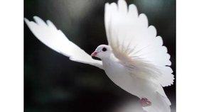 L'Esprit Saint et le Retour de Jésus Christ