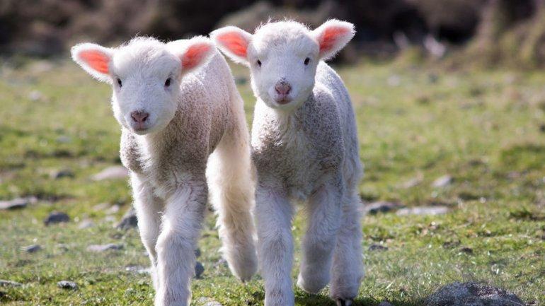 Jésus est le bon berger