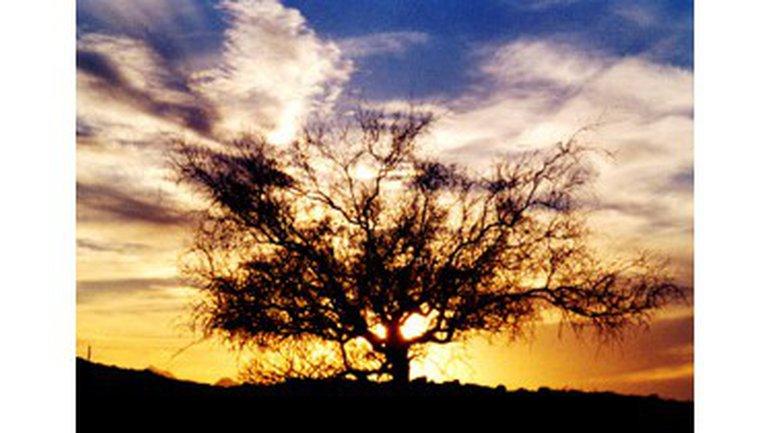La Shekinah : La présence de Dieu