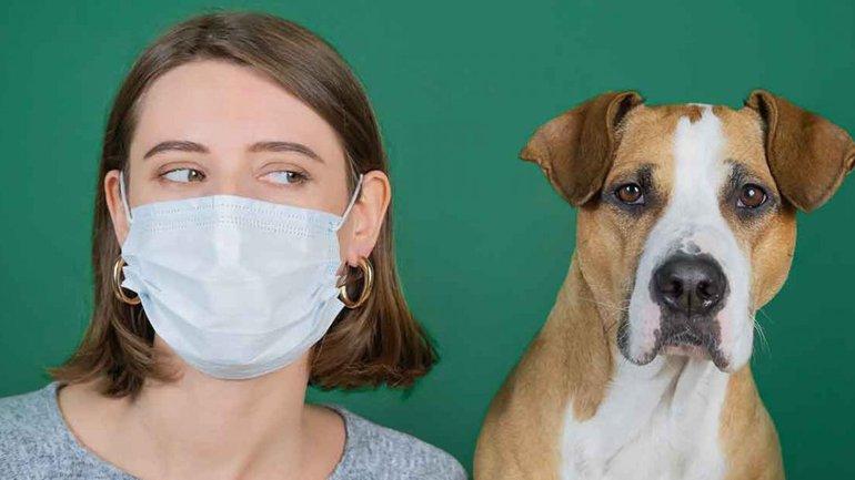 Covid-19 : Mon animal peut-il être contaminé ?