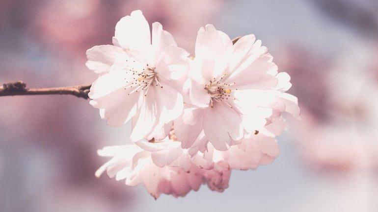 Le printemps revient toujours !