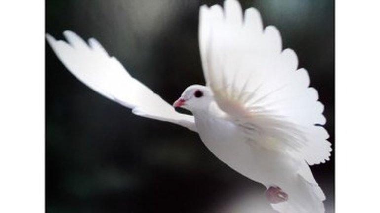 A l'abri de tes ailes