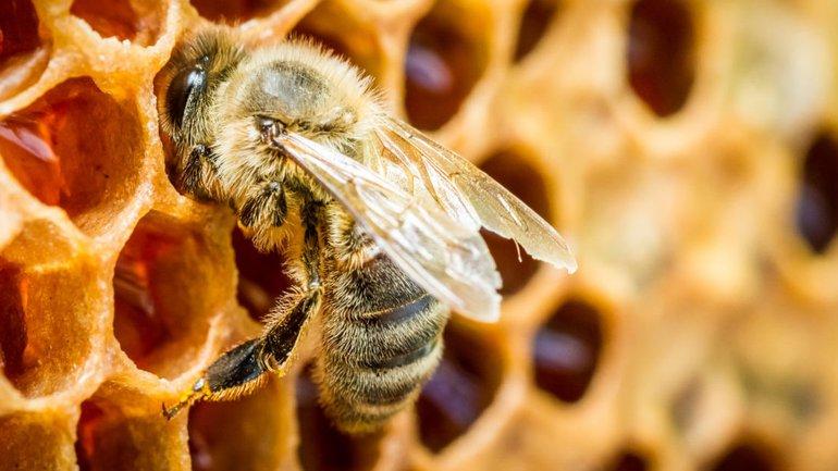 Les abeilles, ouvrières acharnées !