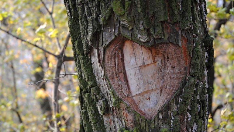 L'arbre blessé
